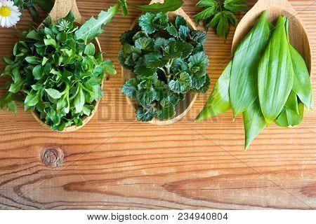 Fresh Wild Edible Spring Herbs On Three Wooden Spoons: Chickweed, Ground-ivy, Wild Garlic, Daisy, Da
