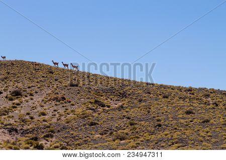 Chilean Mountains Landscape, Chile. Andean Plateau View