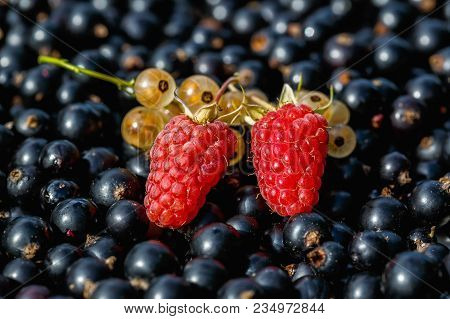 Close Up Ripe Raspberry And Yellow Or White  Currant On The Raw Black Currant Background