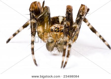 Spider Crawling In Extreme Close Up