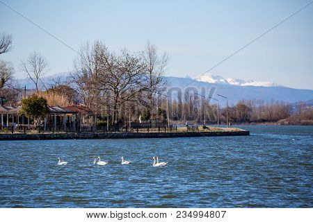 Six Swans Swimming In The Blue Waters Of Lake Pamvotida, Close To The Old Small Greek Town Of Ioanni