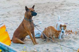 Cute Dog Puppies Playing On The Sand Beach. Dog Shelter Concept. Copy Space. Motivation Concept