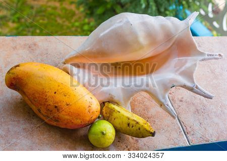 Different Fruits And Big Shell On Table