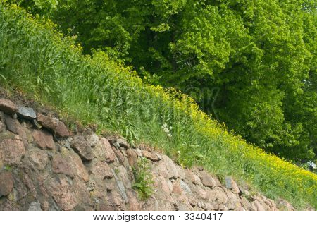 Green Trees, Yellow Flowers And Stone Wall