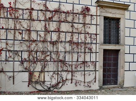 Bougainvillea On The Wall Of An Old House, Czech Republic
