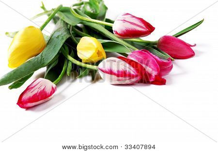 Background With Tulips Bouquet