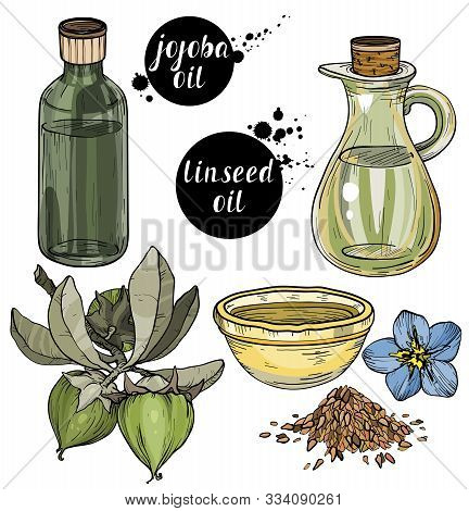 Vector Set Of Organic Ingredients For Cosmetic Care Oils. Linseed And Jojoba Oils. Use For Cosmetic