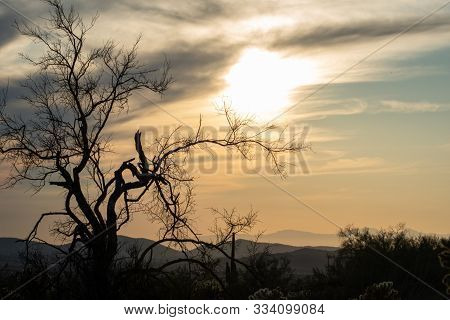 Sunset In The Sonoran Desert With A Tree Silhouette