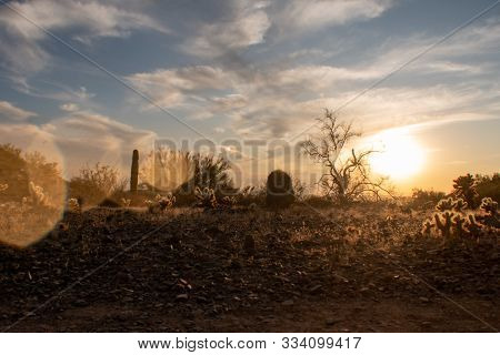 Sunset In The Sonoran Desert With Lens Flare