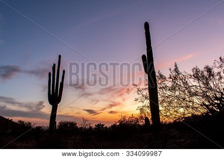Sonoran Desert sunset with cactus and colorful sky
