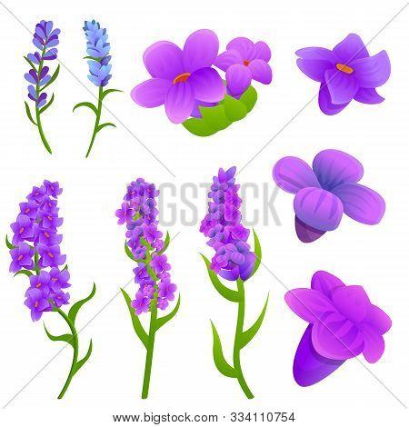 Lavender Icons Set. Cartoon Set Of Lavender Vector Icons For Web Design