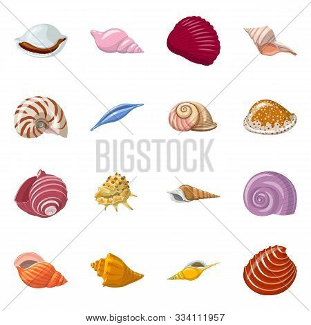 Vector Design Of Seashell And Mollusk Symbol. Set Of Seashell And Seafood Stock Vector Illustration.