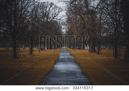 Perspective View Of A Park Pathway With Nobody Around And Irregular Path Shaped By Strange Dry Grass