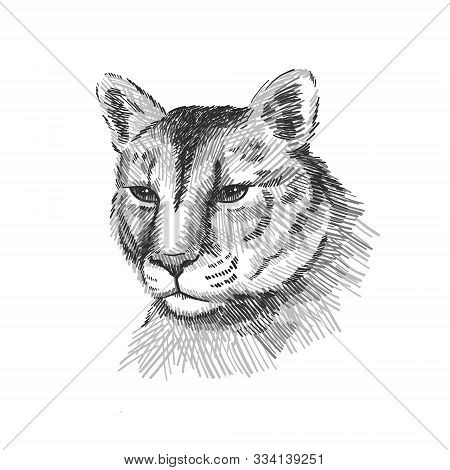 Cougar Portrait. American Mountain Lion, Red Tiger, Panther Animal Face. Puma Predator, Vector Illus