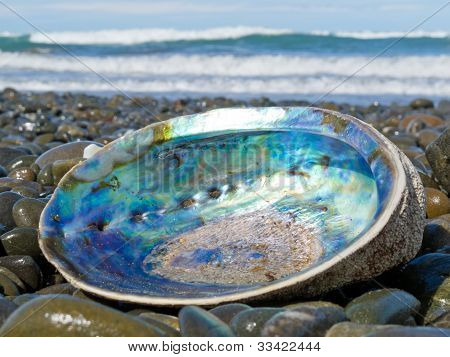 Shiny nacre of Paua shell, Abalone, washed ashore