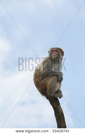 Macaque in a bare treetop. Shot in a country park in Hong Kong poster