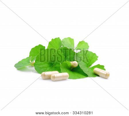 Fresh And Dry Gotu Kola Leaves ( Asiatic Pennywort, Indian Pennywort, Centella Asiatica ) And Capsul