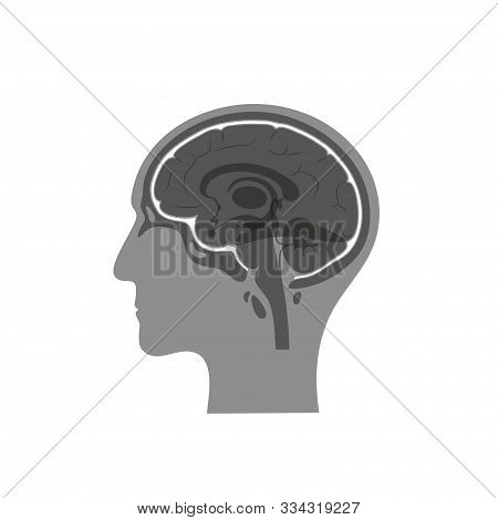 Vector Isolated Illustration Of Meninges In Man Head. Human Brain Components Detailed Anatomy. Medic