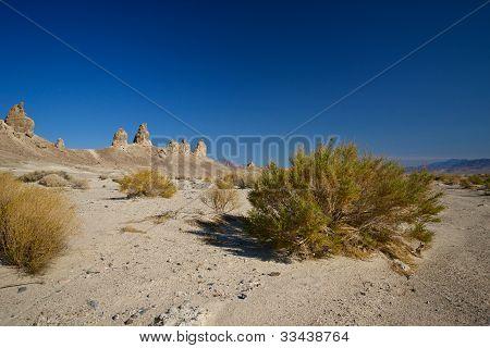Mojave Desrt Scrub Brush