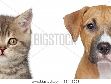 Kitten and puppy. Half of muzzle close up portrait on a white background poster