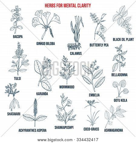 Best Herbs For Mental Clarity. Hand Drawn Vector Set Of Medicinal Plants