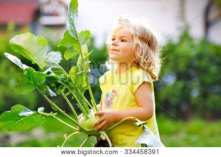 Cute Lovely Toddler Girl With Kohlrabi In Vegetable Garden. Happy Gorgeous Baby Child Having Fun Wit
