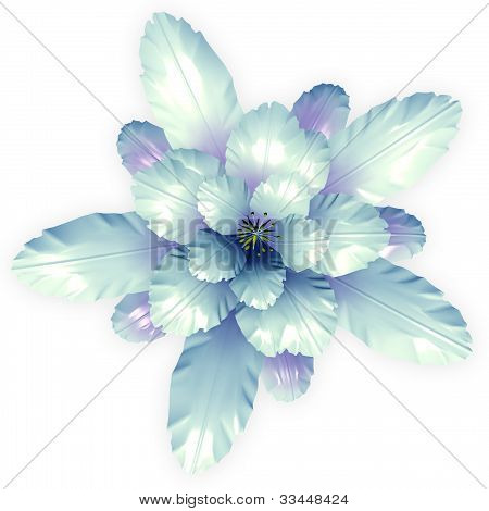 A Blue Echinopsis Cactus Flower Isolated On White