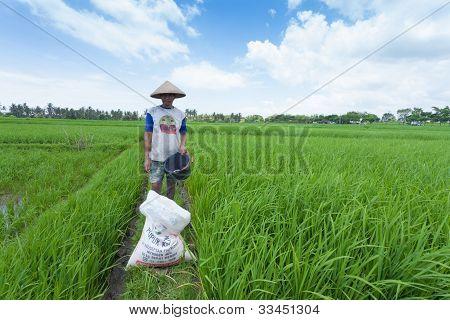 Reisbäuerin in bali