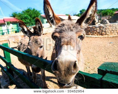 Donkey Outdoors