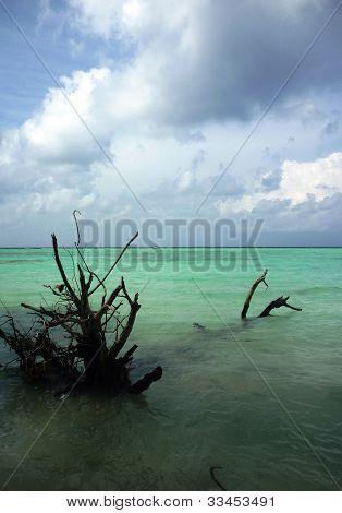 dry sticks on the beach