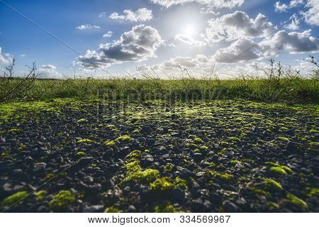 Asphalt Overgrown With Moss And Landscape For Backgrounds