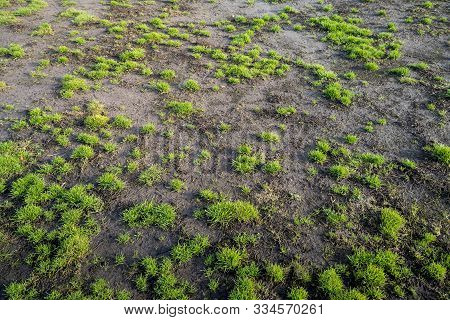 Damaged Lawn At A Soccer Field For Backgrounds