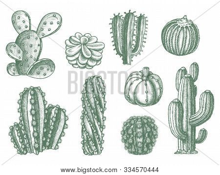 Cactus Vector Sketch Icons, Hand Drawn Botanical Illustration. Different Types Of Cactus And Cacti P