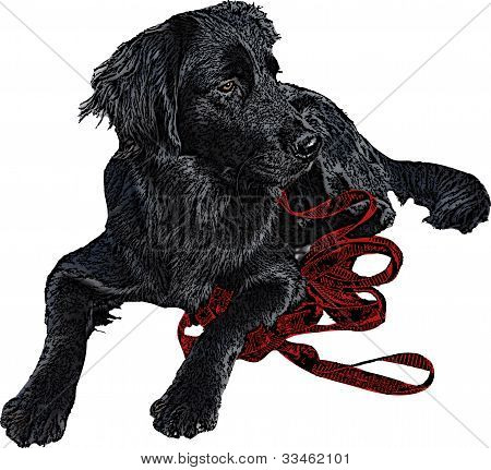 Black Labrador Retriever Illustration