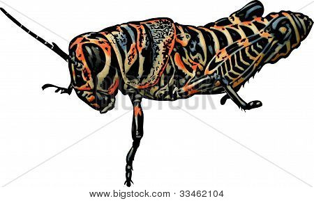 Yellow and Orange Grasshopper Illustration