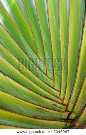 A close up of the interconnecting fronds of a tropical palm tree poster