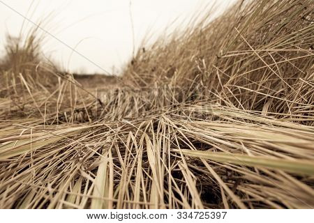 Texture of wilted Grass. Dry grass background. Grass texture in black and white tone. Abstract nature background. poster