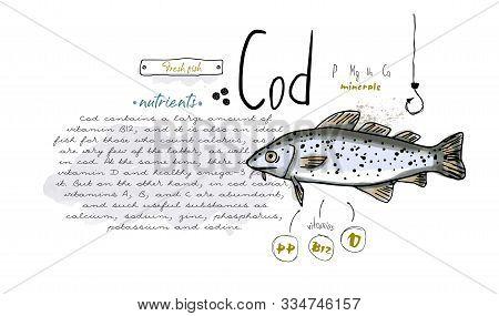 Fish Hand Drawn Set Watercolor Ink, Food Vitamin Menu Restaurant, Sketch Cartoon Vector Illustration