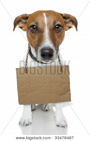 Dog With Empty  brown  Cardboard hopeless looking poster
