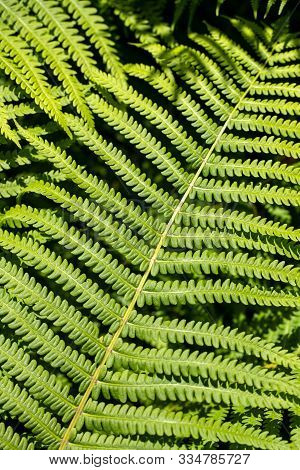 View Of Green Leafed Plant In The Summer Time Garden. Macro Photography Of Lively Nature.