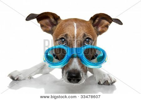 Dog With Blue Goggles