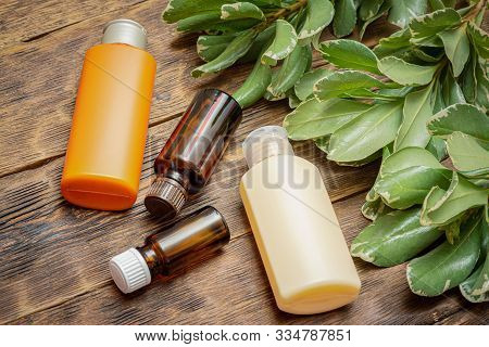 Hand Cream Tube, Essential Oil Bottle And Barberry Thunberg Kornik Branch With With Leaves Close Up.