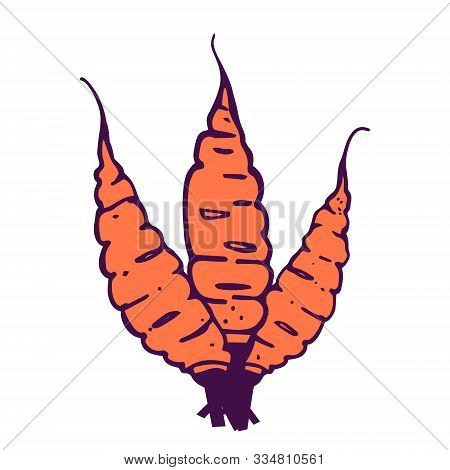 Three Carrots Bouquet Illustration. Hand-drawn In Cartoon Style. Colored Artwork Isolated On White B