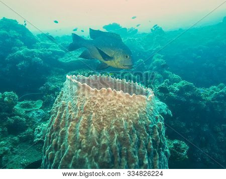 Midnight Snapper And Barrel Sponge At The Wreck Of The Liberty In Tulamben, Bali