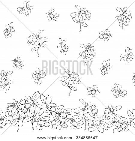 Cranberry. Seamless Pattern, Background. Outline Hand Drawing Vector Illustration