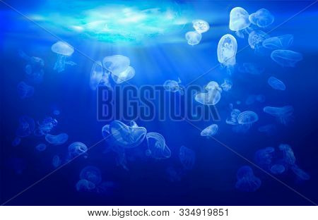 A group of jellyfish floating in coastal waters. Underwater sea world with marine animals. Life in the coral reef. Blue background.