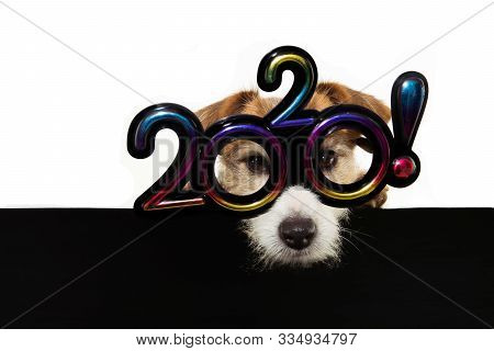 Pet Jack Russell Dog Celebrating New Year 2020 With Text Glasses Showing A Black Placard. Isolated O