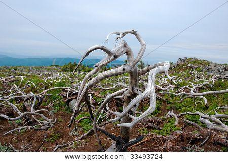 Meadow Of Dead Trees