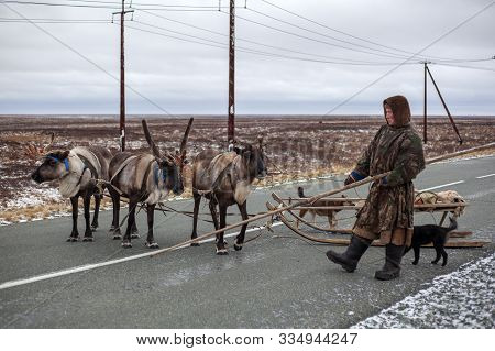 The Extreme North, Yamal,   Reindeer In Tundra , Open Area, Assistant Reindeer Breeder,  The Men  In