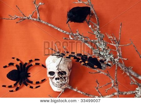 Raven And Skull With Tarantulas